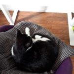 Online onderwijs met kat op schoot